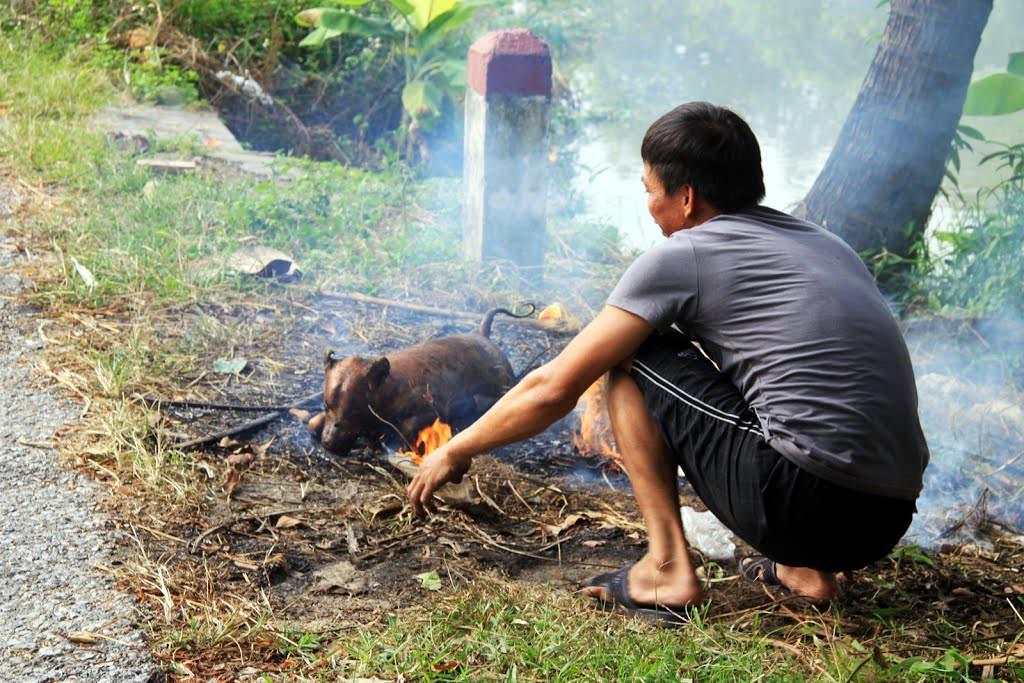 Hướng dẫn cách lọc thịt chó đơn giản để làm thịt chó 7 món tại nhà 2