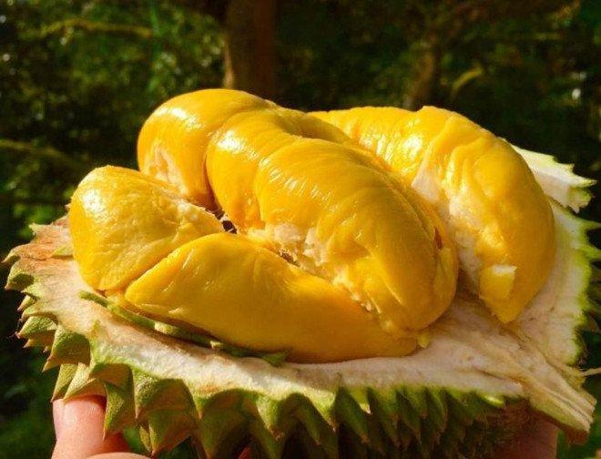 ăn sầu riêng có tốt không