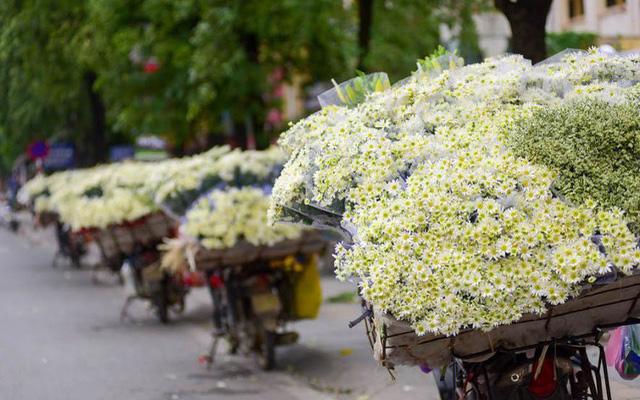 mùa đông có hoa gì