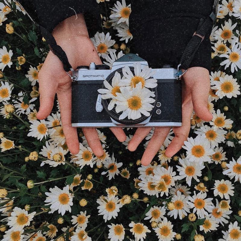Mùa đông có hoa gì - Hoa cúc họa mi