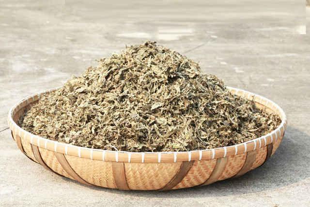 Thử ngay tác dụng của cây ngải cứu phơi khô và cảm nhận giá trị sức khỏe 2