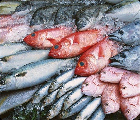 ăn cá có béo không