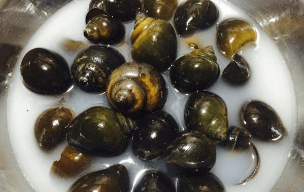 cách chế biến ốc bươu vàng
