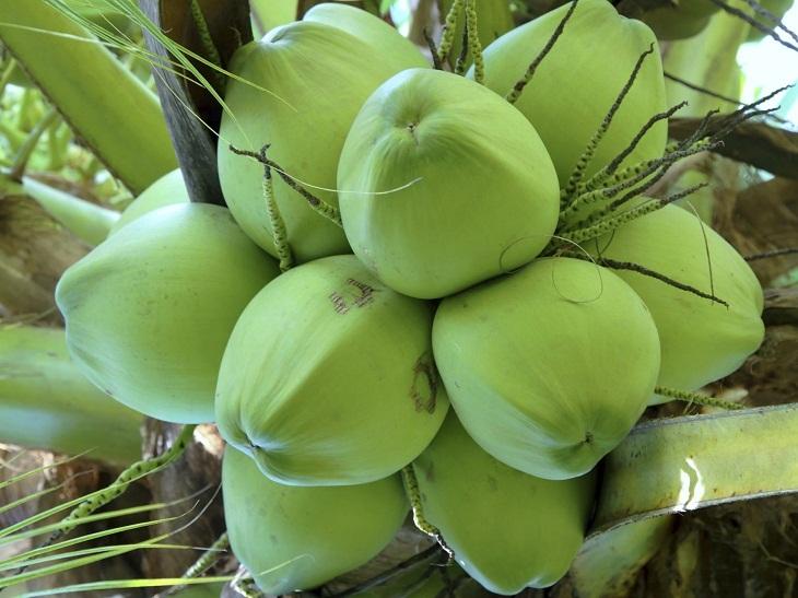 Cách bảo quản nước dừa lâu mà vẫn giữ nguyên hương vị 1