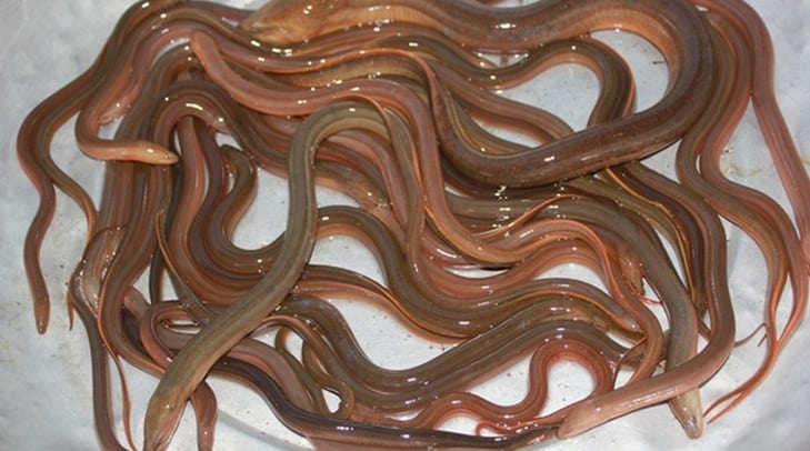 cách làm lươn xào sả ớt