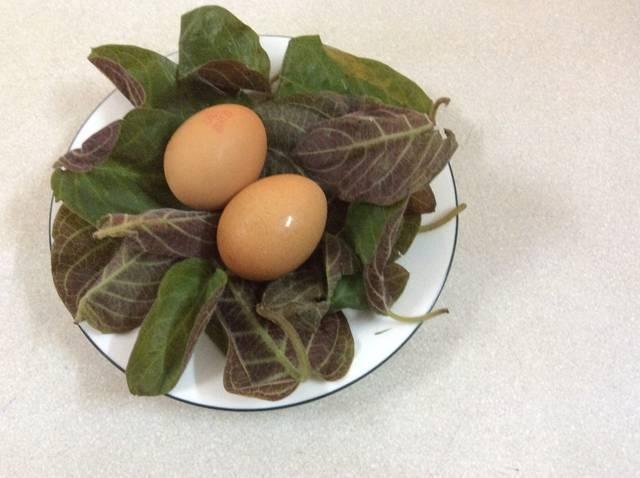 công dụng của lá mơ lông với trứng gà đối với sức khỏe 1