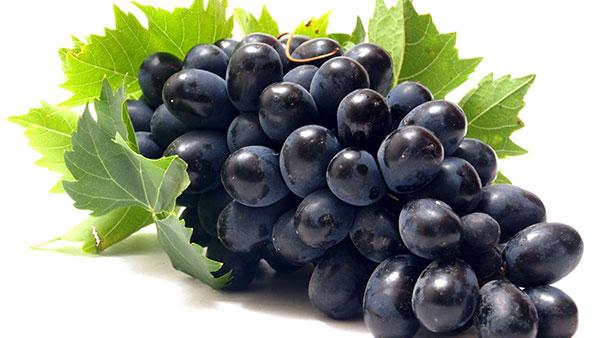 Mùa đông có quả gì? Khám phá các loại quả tốt cho sức khỏe mùa lạnh 14