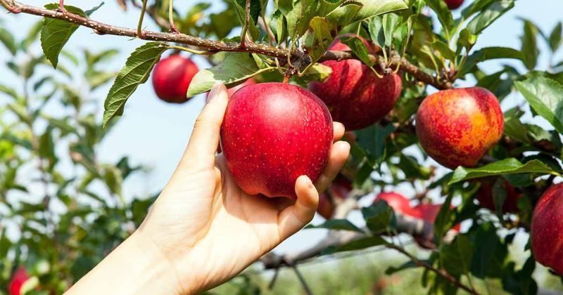 Mùa đông có quả gì? Khám phá các loại quả tốt cho sức khỏe mùa lạnh 10