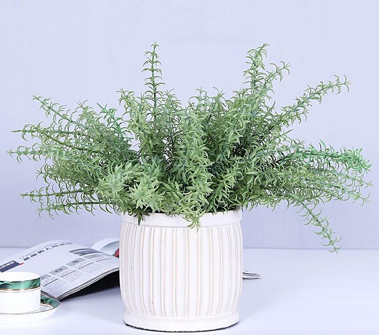 Tác dụng của cây hương thảo 1