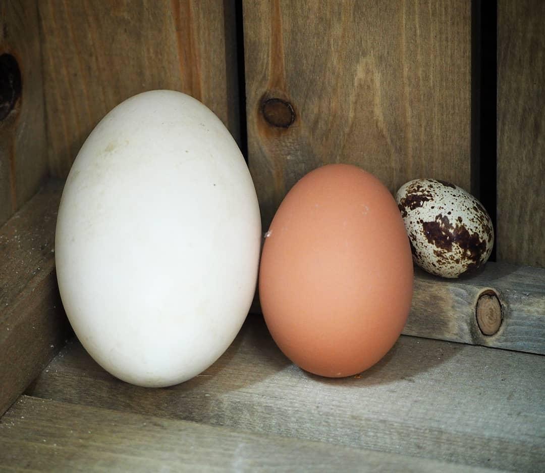tác dụng của trứng ngỗng 2