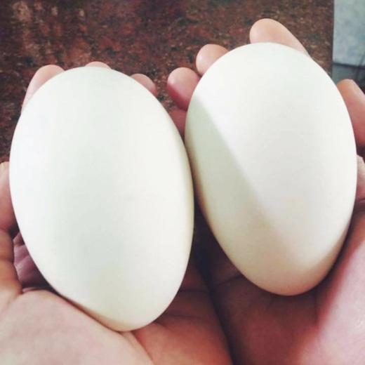 trứng ngỗng có chất gì - chất dinh dưỡng có trong trúng ngỗng