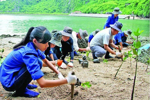 Trồng cây gây rừng để bảo vệ môi trường