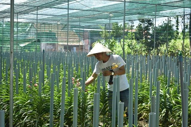 Hướng đến nông nghiệp xanh