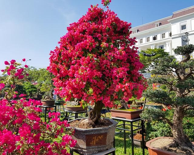 Cây hợp mệnh Thổ nhất trong phong thủy là những cây có màu đỏ, vàng, cam, tím, hồng