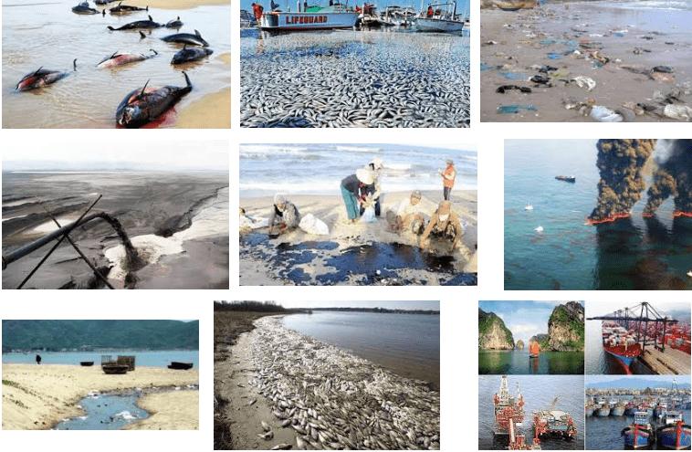 Hậu quả của ô nhiễm môi trường