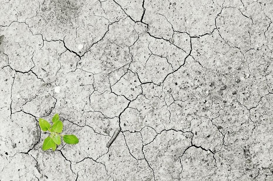 Ô nhiễm đất ảnh hưởng đến hệ sinh thái toàn cầu