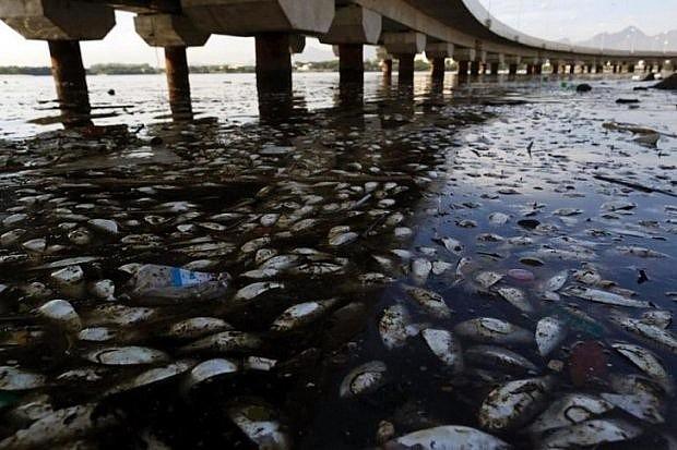 Hàng loạt cá chết trên vịnh Guanbara ở Brazil