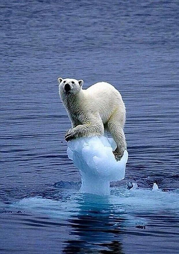 Hiện tượng băng tan đe dọa sự sống của các loài động vật