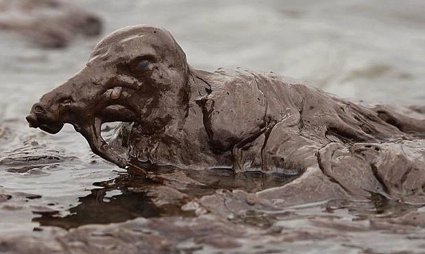 Tại bờ biển Louisiana, một chú chim bị mắc kẹt khi xà xuống nước do lượng dầu trong nước quá dày đặc