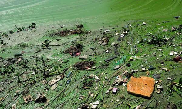 Hồ Taihu (Thái Hồ) của Yixing, tỉnh Giang Tô, Trung Quốc nổi váng màu xanh lá cây cùng bọt màu nâu độc hại.