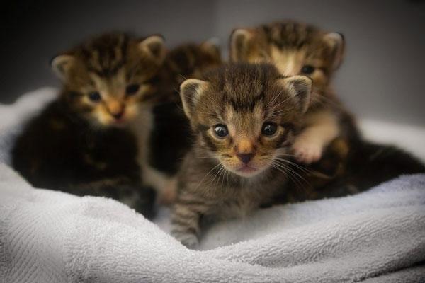 Cách chăm sóc mèo con 2