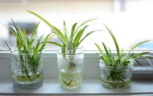 Cách trồng cây thủy sinh để bàn