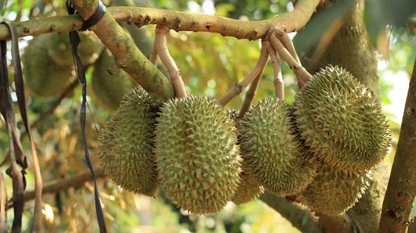 Trái cây đặc sản Bến Tre