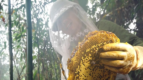 Mật ong rừng U Minh Cà Mau