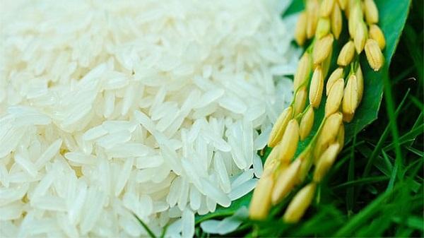Gạo nàng thơm chợ Đào Long An