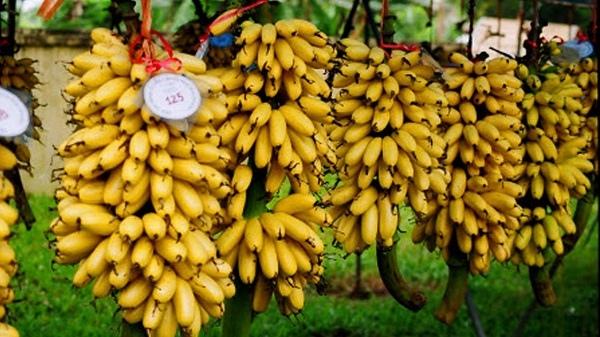 Chuối ngự chợ Rồng Nam Định