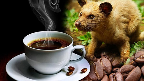 Cà phê Phú Yên