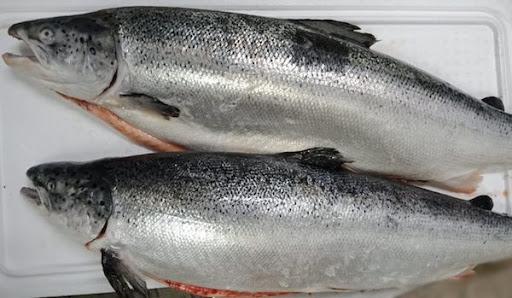 giá cá hồi