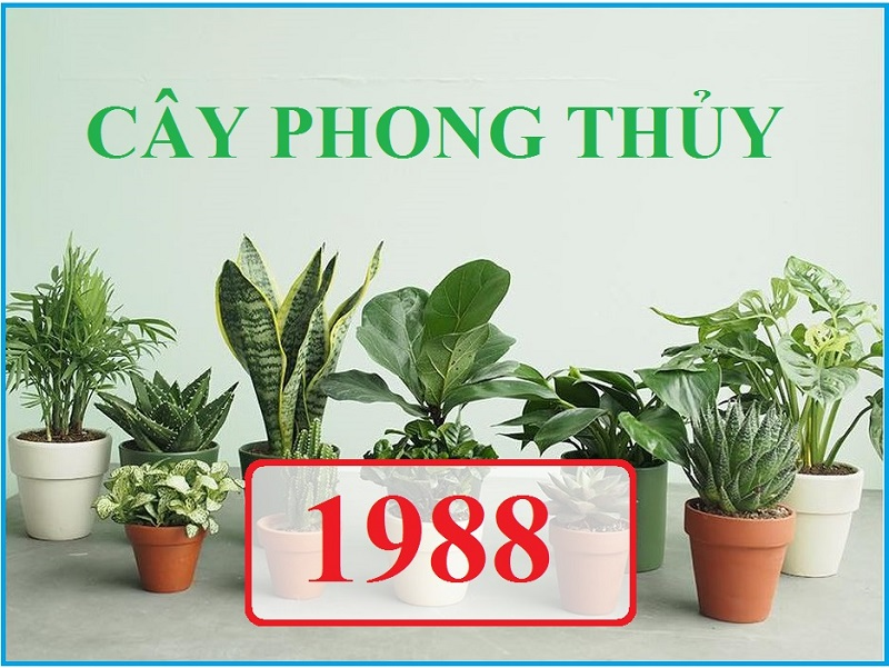 1988 hợp cây gì 1
