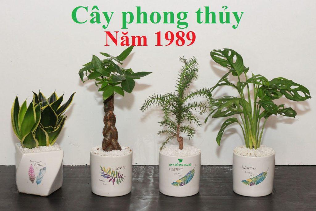 1989 hợp cây gì 1