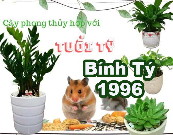 1996 hợp cây gì 1