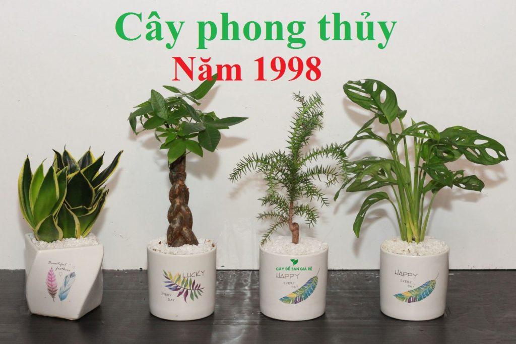 1998 hợp cây gì 1