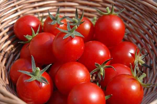 bảo quản cà chua 1