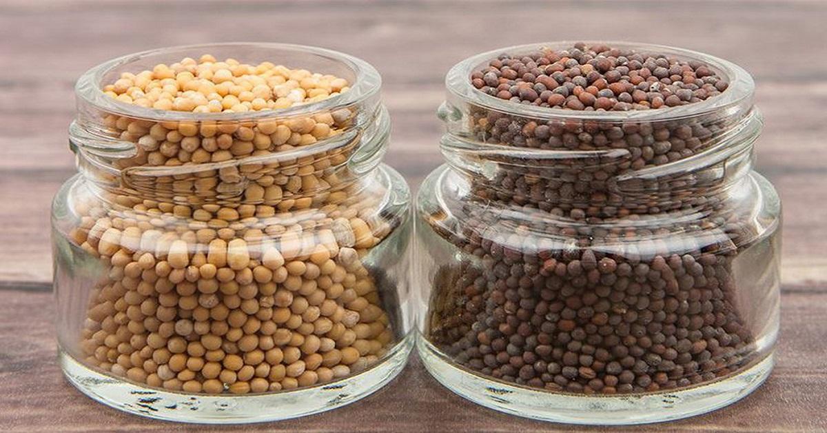 bảo quản hạt giống 4