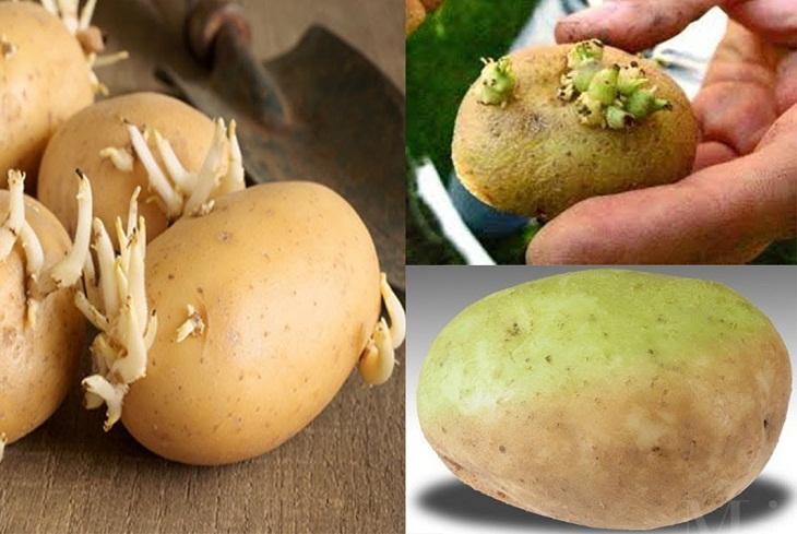 bảo quản khoai tây 4