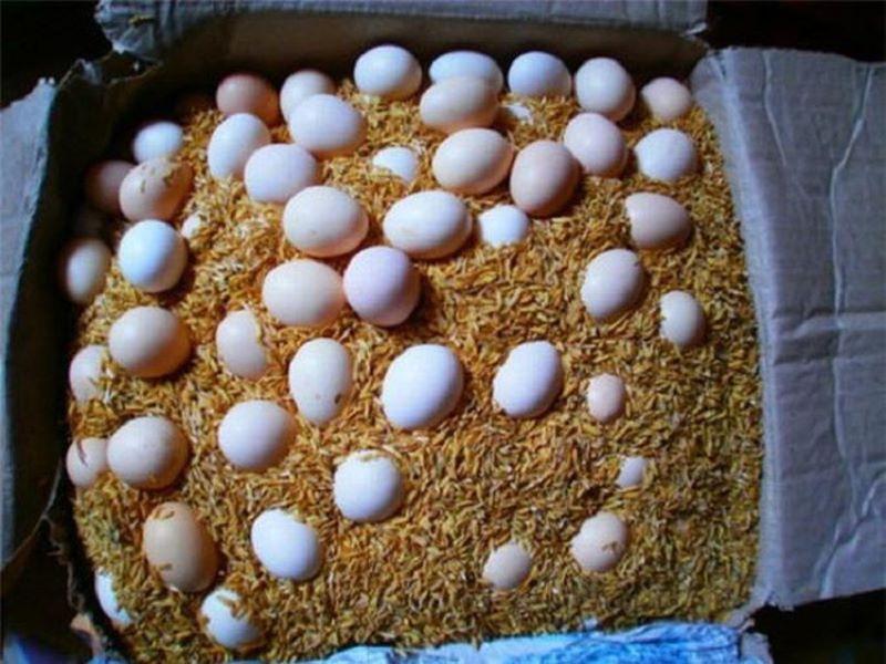 bảo quản trứng gà 4