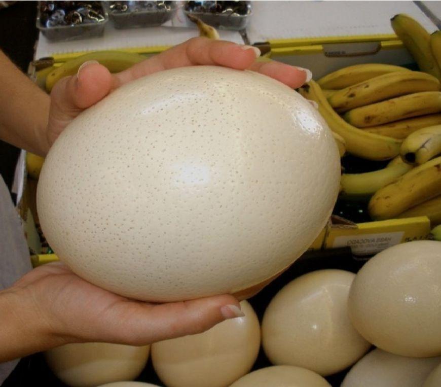 giá trứng đà điểu