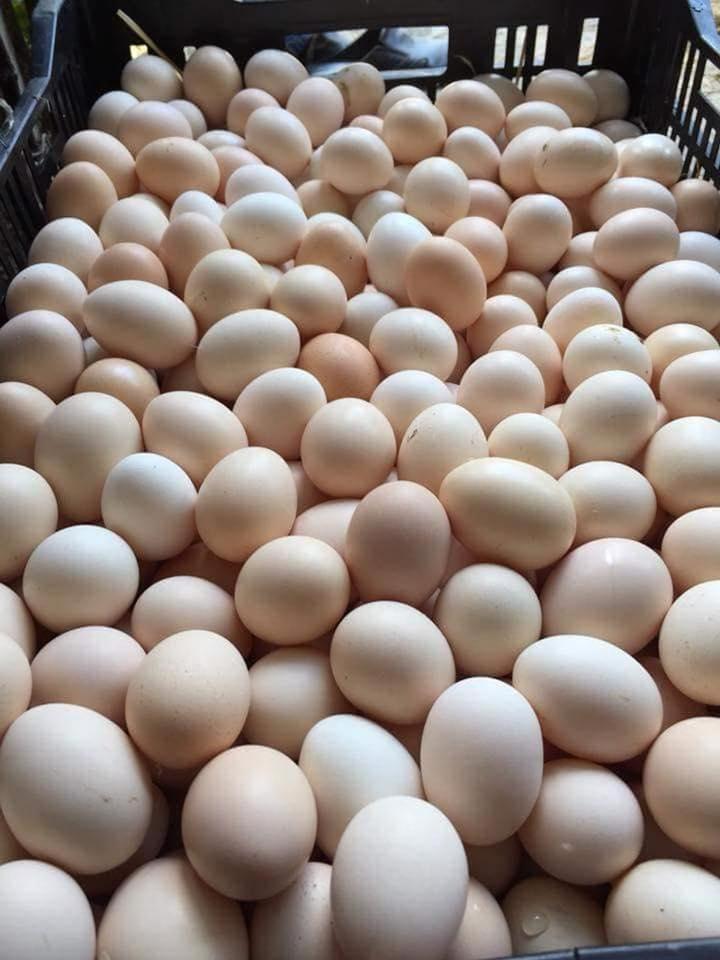 giá trứng gà