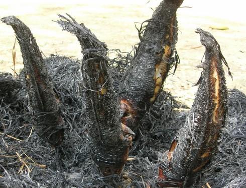 cá lóc nướng rơm 3