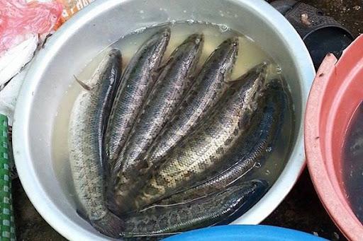 cá quả hấp xì dầu 2