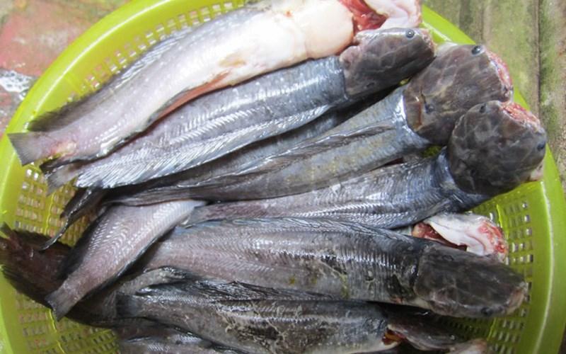 cách làm cá trê kho tiêu 2