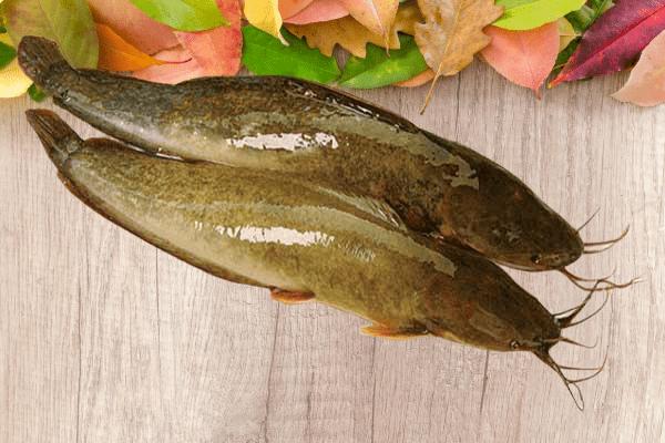 cách làm cá trê nướng giấy bạc 2