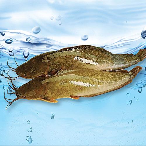 cách làm cá trê nướng sa tế 2