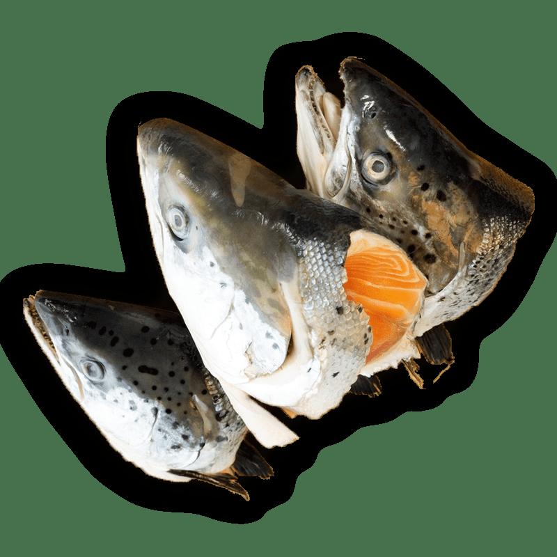 cách làm đầu cá hồi kho 2