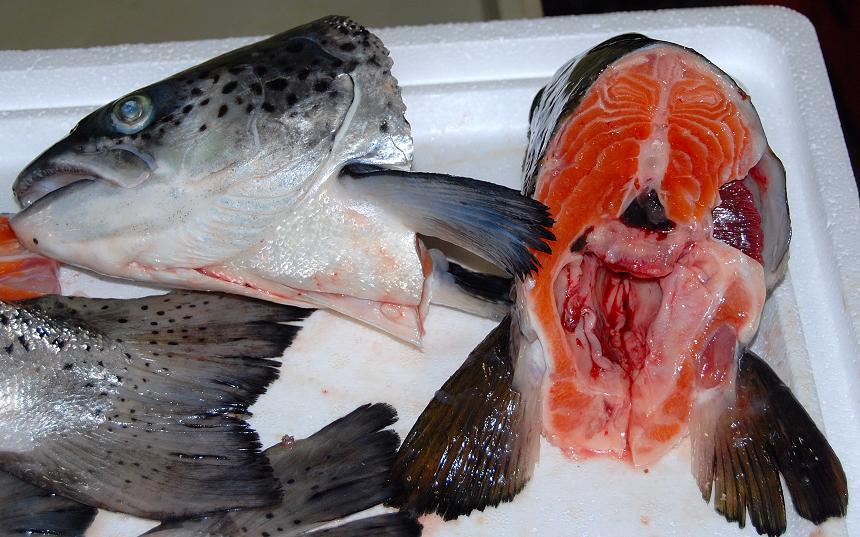 cách làm đầu cá hồi nấu ngót 2