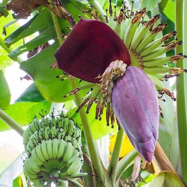 hoa chuối xào tỏi 2